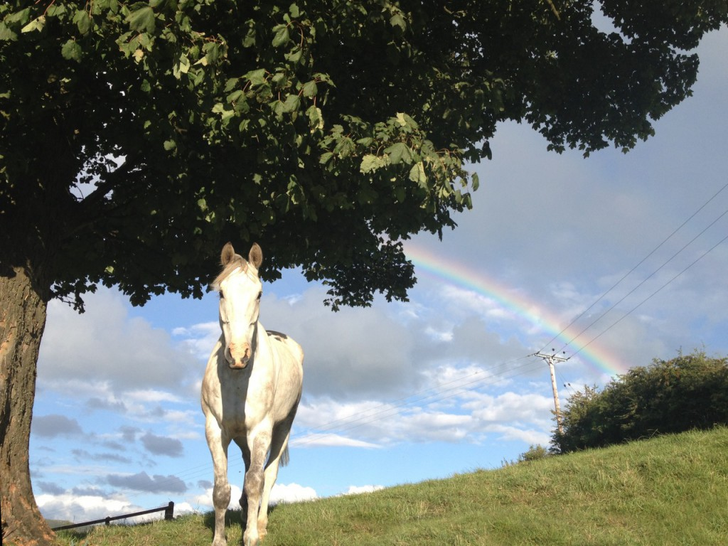 Photo of a white horse in a field with clouds and a rainbow