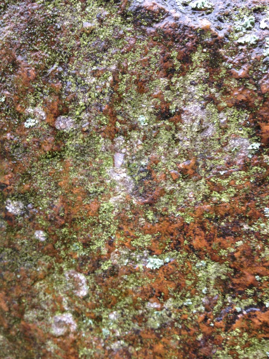 Moss on Yorkshire rocks