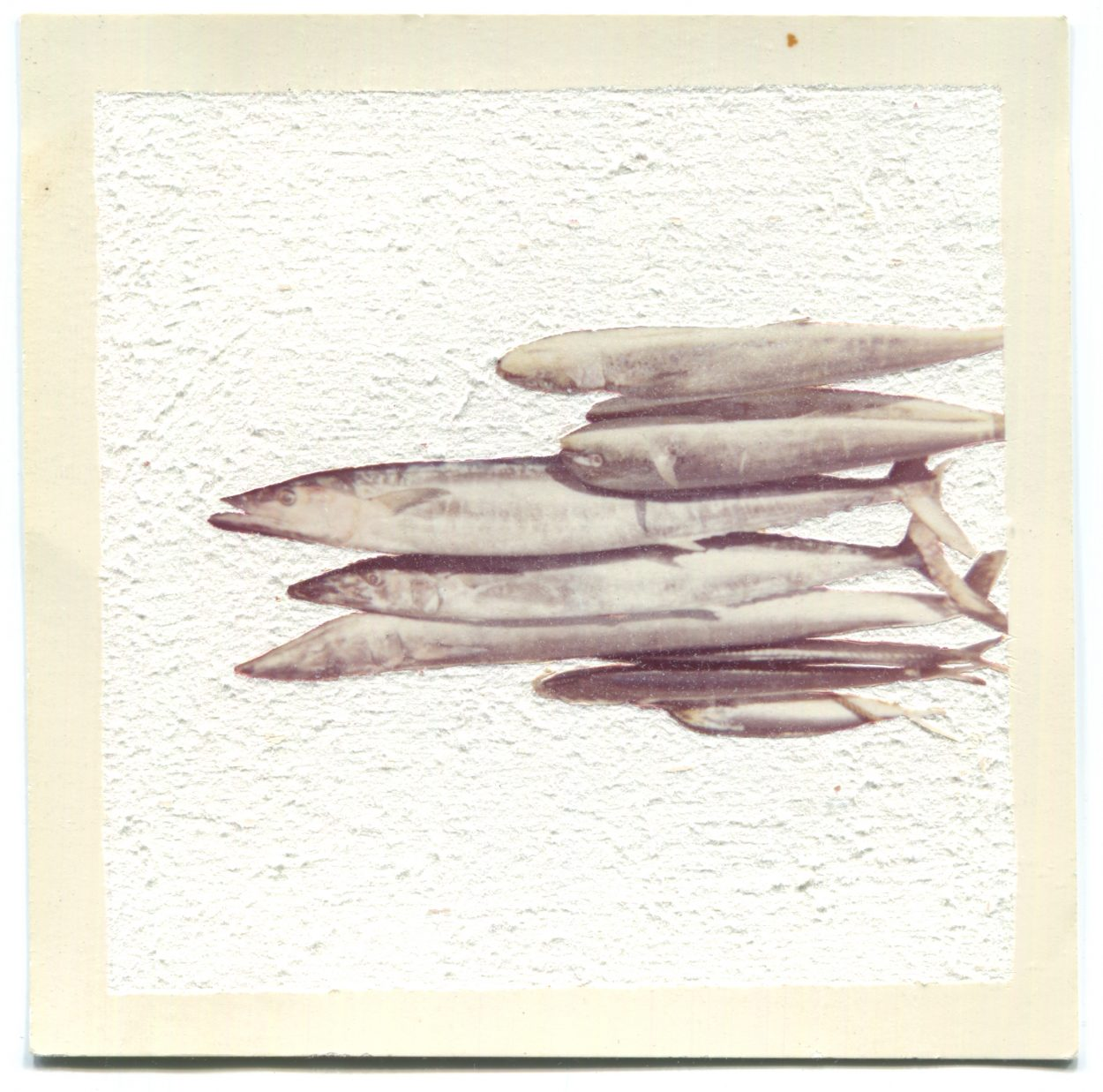 Fish in an altered found photograph