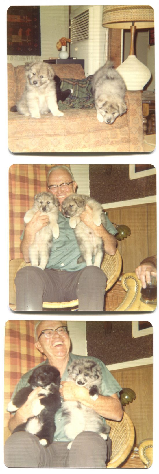 Photos of man with puppies in the 70s