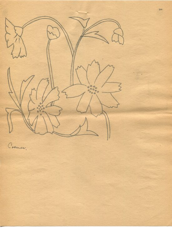 Line drawing of the Cosmos flowers by Alta Quick