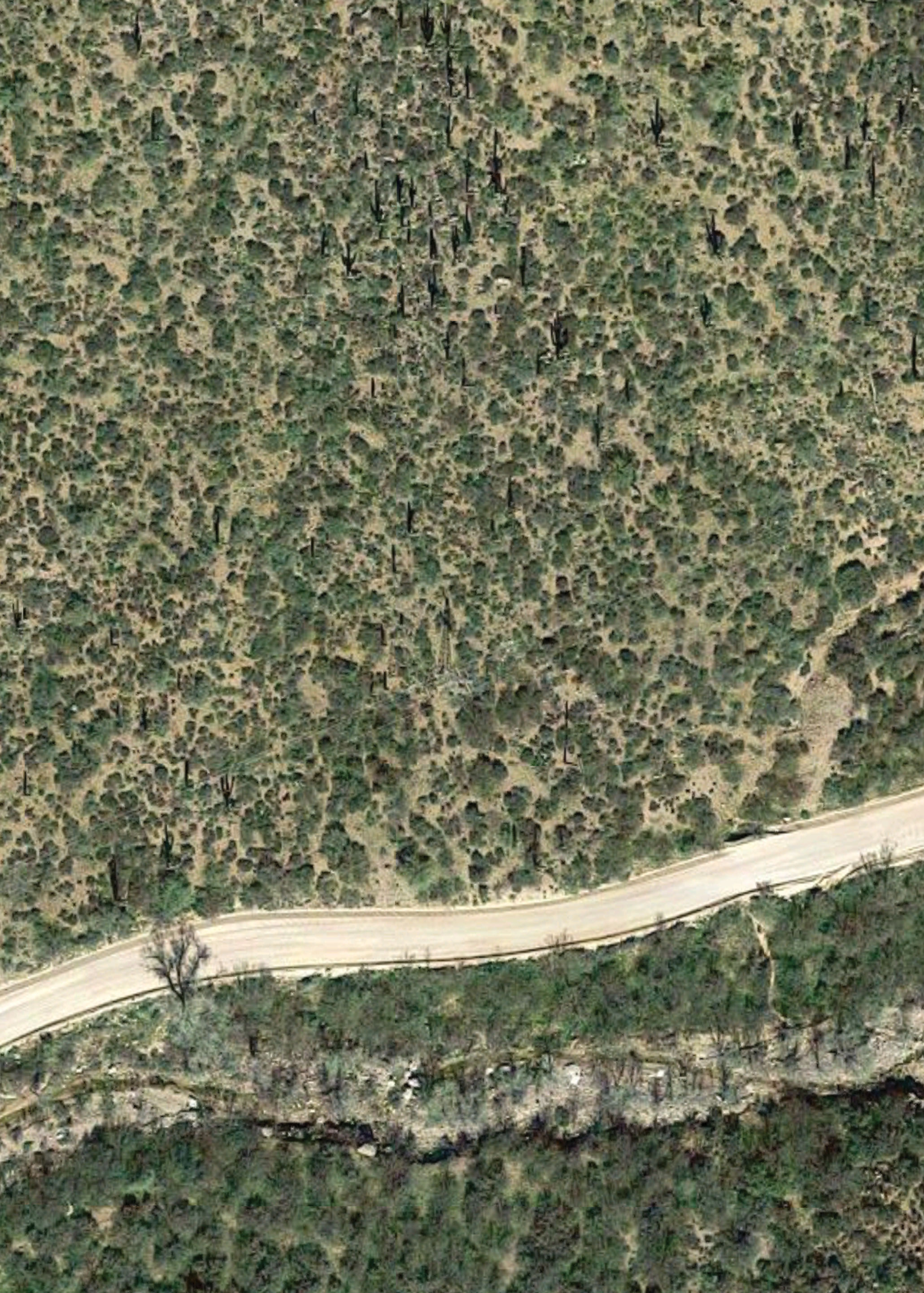 Satellite view of saguaros along Arizona State Route 88, imagery copyright Google 2016