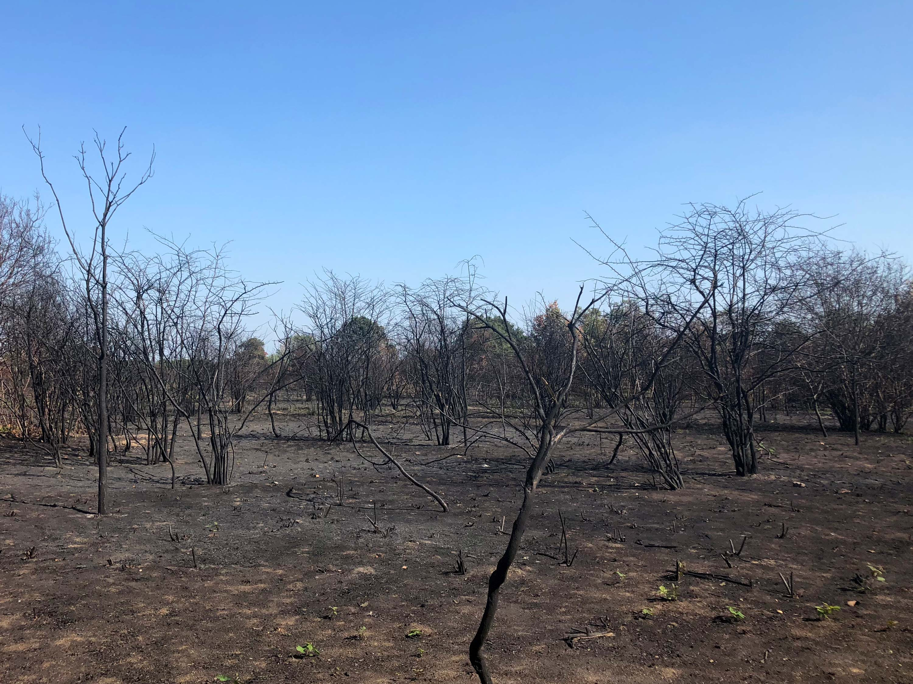 Wanstead Flats after 2018 fire