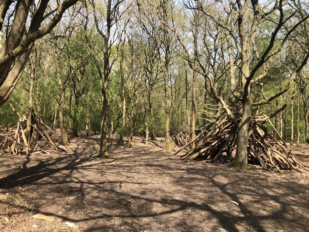Trees in Epping Forest