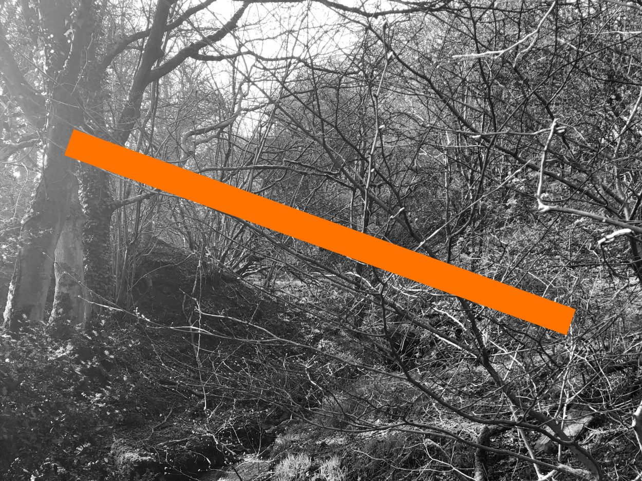 Black and white photo of a forest with a thick orange line running through it