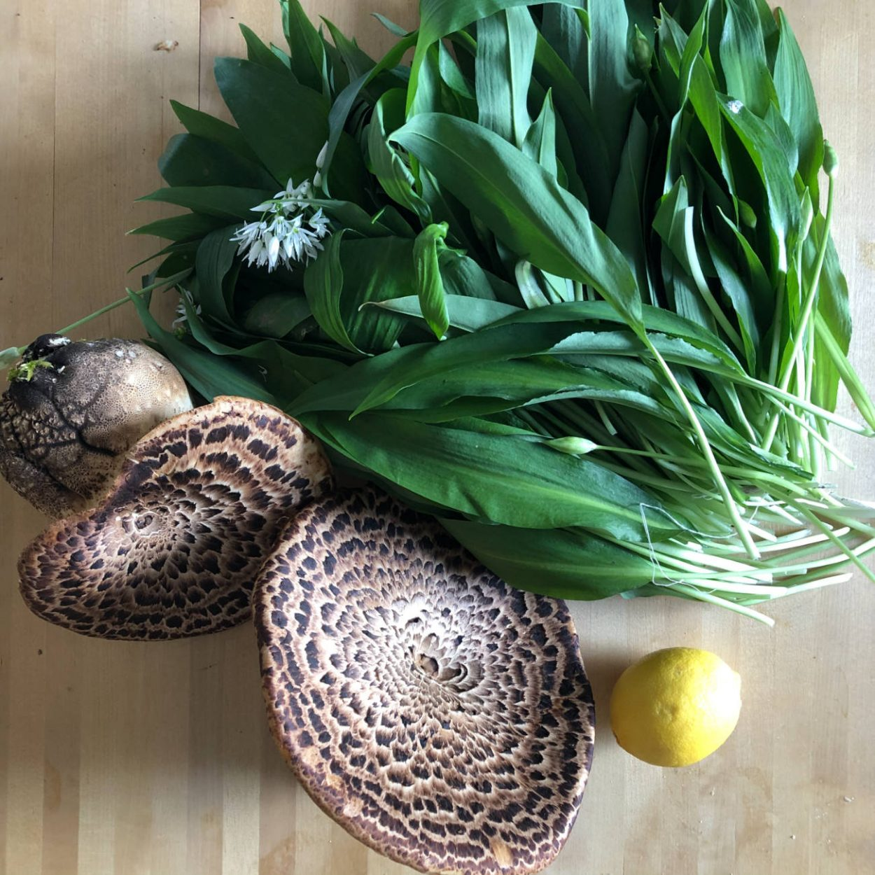 Wild garlic and Dryad's Saddle mushrooms with a lemon for scale