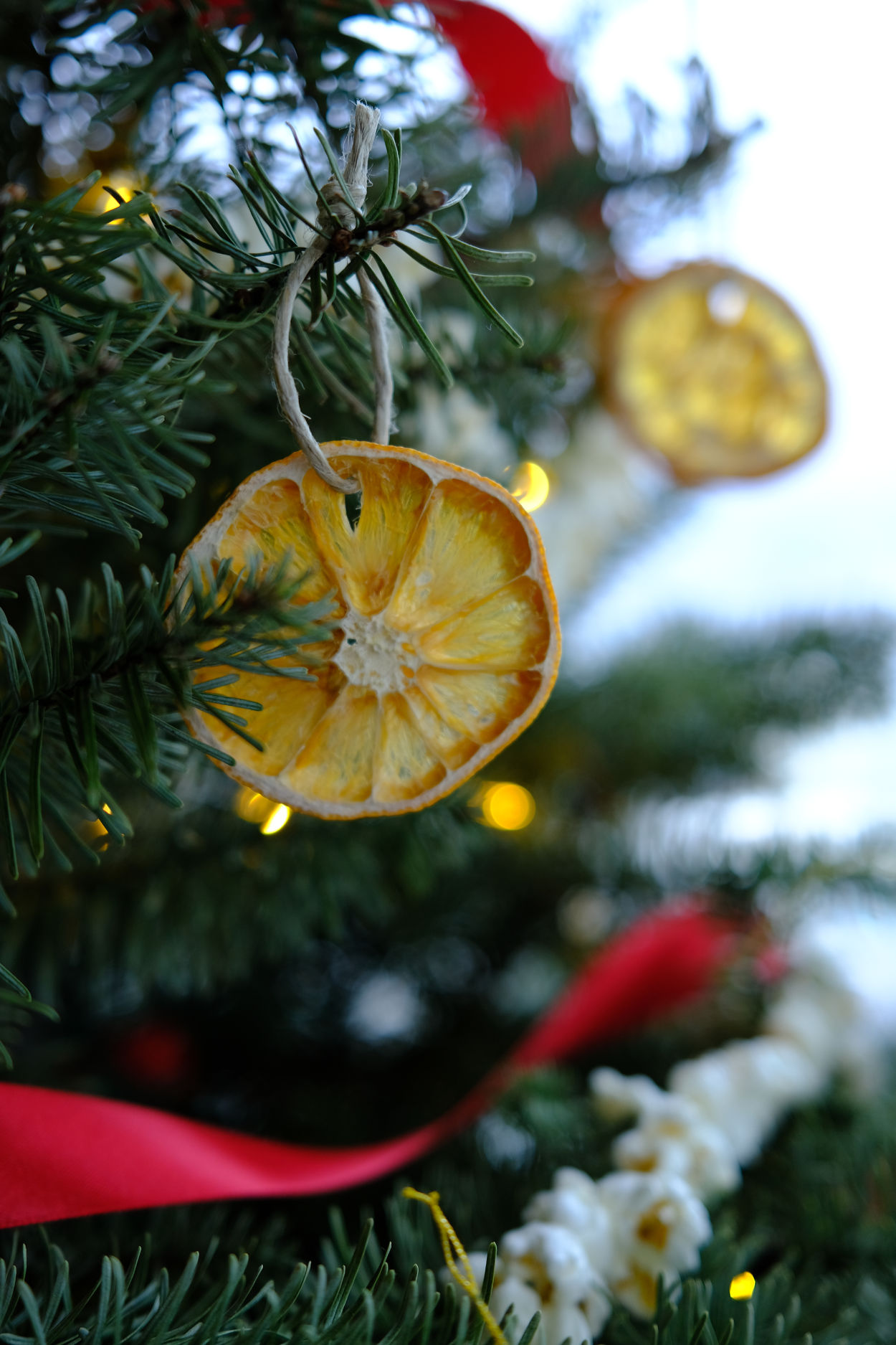Dried orange ornaments on a Christmas tree
